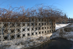 Good wall with hairstyle. (Tim Kiser) Tags: 2017 20170218 citizensnationalbank emmetcounty emmetcountymichigan february february2017 img1611 michigan michiganstreet petoskey petoskeymichigan petoskeystreet branches circlepattern circles circlesinsquares concreteopenwork concreteopenworkwall concretesquares concretewall dirtysnow downtown downtownpetoskey eveningsun holes holeywall northmichigan northernlowerpeninsula northernmichigan openwork openworkwall repetitivepattern seethroughwall snow sunny sunnyevening wall wallwithholes wintersun