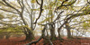 [Explore 04/12/2017] Puy des goules - Auvergne - France (chassamax) Tags: 1x2 arbres automn automne boyer brouillard brume canon6d cloud couleur europe fall fog forest foret formatpaysage france hetre hêtre maxence maxenceboyer maxenceboyerphoto mist nature nuage panorama paysage puy puydedome puydedôme puydesgoules tree volcan volcano wwwmaxenceboyerphotocom