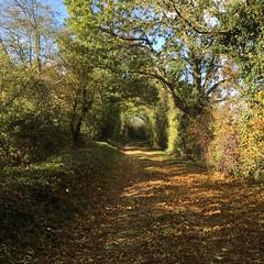 Dans la campagne autour de Niort (nic0v0dka) Tags: path fall automne autumn