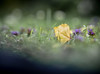 Lonely leaf (Dan Österberg) Tags: flower macro bokeh nature ground grass vegetation green gray