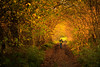 Magische Allee [explored] (O.I.S.) Tags: wald forest trees bäume weg path pfad teutoburger nrw germany deutschland wandern hiking silberbachtal silberbach silberbachpfad canon eos m3 50mm 18 stm lippe