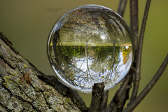 upside down reality (mariola aga) Tags: autumn fall spencerpark belvidere park tree branches treetrunk glass ball reflection refraction upsidedown art coth alittlebeauty coth5 sunrays5