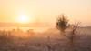 Sunrise in the Mist [Explored 10.11.17] (Luziferian) Tags: monring early mist fog haze hazy foggy misty sunrise goldenhour tree frost rime cold freezing hoarfrost landscape schleswigholstein kiel hdr highdynamicrange