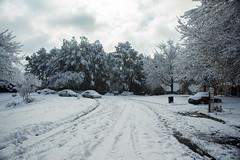 Atlanta Snowstorm 2017 (sarahmonious) Tags: snow snowfall snowlandscape snowstorm snowy snowyhouses snowylandscape snowytrees atlanta atlantaga atlantageorgia georgia atl woodstock woodstockga woodstockgeorgia northgeorgia winter winterwonderland winterywonderland whitewinter winterlandscape
