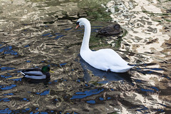 Animals. (ost_jean) Tags: swan animals zwaan canard eenden nikon d5200 tamron sp 90mm f28 di vc usd macro 11 f004n ostjean ducks