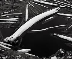 Snow covered Logs, Spirit Lake, near Mount St. Helens (austin granger) Tags: spiritlake mountsthelens washington volcano logs trees death eruption snow evidence geology logmat mountsthelensvolcanicnationalmonument film gf670