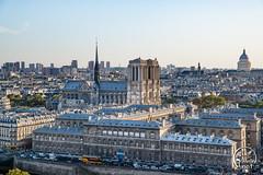 Cathédrale Notre Dame - Paris - France (vlegallic) Tags: paris îledefrance france fr notredame notredamedeparis cathédrale nikon nikond610 d610 tamron tamronsp2470mmf28divcusd tamron2470 sun urbanshot city cityscape