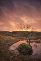 The Rock and Tree (Captain Nikon) Tags: kellyhalltarn torver lakedistrict northwest england cumbria nationalpark tarn lake lonetree reflections sunrise dawn greatbritain landscapephotography landscapes intimate