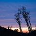Topanga State Park - California