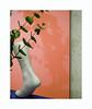Plante de pied (hélène chantemerle) Tags: plantes pied ombre vert orange bleu mur lants foot shadows wall green blue