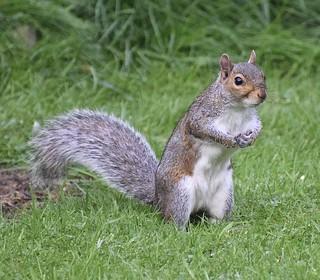 Saturday Squirrel #1