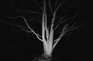 Stark tree, Lumiere, Durham