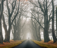 Foggy wee me (chrismarr82) Tags: fog tree road renfrewshire nikon d750