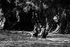 knee-high (jellamalo) Tags: nature hike river adventure blakandwhite