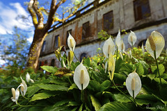 Baguio City (Sumarie Slabber) Tags: baguio philippines sumarieslabber flowers building diplomathotel garden ww2 nikond750 decay