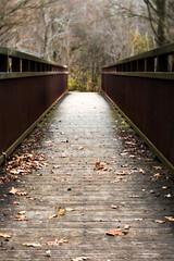 Autumn Bridge (paisleyrainboots) Tags: 365velvet56 november vanraatlefarm velvet56 bridge light leadinglines path