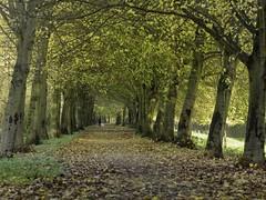 Autumn (Mario van der Wel) Tags: autumn herfst bomen bladeren broekpolder nederland leafs