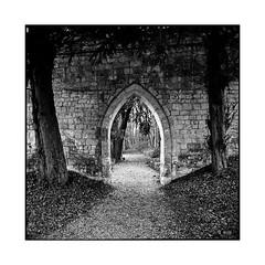 path 1 • saint wandrille, normandy • 2016 (lem's) Tags: path chemin alcove voute arch square garden parc jardin abbaye abbey saint wandrille normandie normandy rolleiflex t