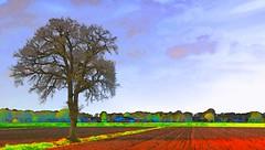 lonely tree (HansHolt) Tags: landscape landschap tree boom lonely only ruleofthirds regladelostercios règledestiers drittelregel regelvanderden eenzaam alleen akker field arableland plowed geploegd agriculture farm boerderij sky clouds zuidwolde drenthe netherlands canon 6d canoneos6d canonef24105mmf4lisusm