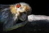 TRÄUMERLE/DREAMING (babsbaron) Tags: nature animals tiere affen apes monkeys berberaffe barbaryape tierpark thüle