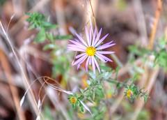 2017 - Wichita Mountains Wildlife Refuge (zendt66) Tags: zendt66 zendt nikon d7200 hdr photomatix hiking camping wichita mountains wildlife refuge