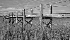Dock 3 (brev99) Tags: d610 tamron28300xrdiif barrington rhodeisland reeds dock viewnx2 cacorrection river water photoshopelements12 topazdetail photos dxoopticspro blackandwhite