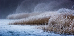 Reedwave (Beppe Rijs) Tags: deutschland landschaft schleswigholstein germany schlei landscape natur nature gras blue blau winter schnee snow weather wetter wind frost hoarfrost rime raureif