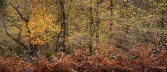 End of Autumn (Ade G) Tags: seasons autumn bracken colour plants trees walls