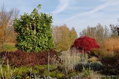 Britzer Garten / colours of autumn (Sockenhummel) Tags: britzergarten grünberlin herbst fuji x30 autumn fall berlin garten park rot bäume büsche bunt