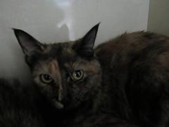 Juniper - 2 year old spayed female