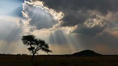 Wolken über der Dornbuschsavanne (marionkaminski) Tags: namibia afrika africa savanne buschsavanne landscape paysage paisaje wolken clouds nubes nuages baum tree arbre arbol sonnenlicht gegenlicht panasonic lumixfz1000