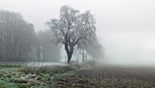 Foggy day on the Niederrhein