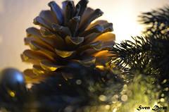 CHRISTMAS (Sven Dost) Tags: christmas tannenzapfen weihnachten nikolaus tree macro makro sven dost nikon d5100 sigma 105mm blumen flowers blume flower