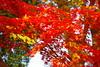 KS IMGP1744 (pentaxsasjapan) Tags: asia japan tokyo autumn fall red leaf pentax k70 shining 東京 足立区 紅葉 秋 赤 ペンタックス