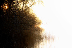 Elk Lake Morning Fog & Sun Battle (professional recreationalist) Tags: brucedean professionalrecreationalist victoriabc britishcolumbia elk lake elklake flyfishing fly fishing morning sunrise fog mist bright glare nature