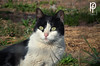 Gato (-Patt-) Tags: animal cat sanctuary ong animalessinhogar ash uruguay montevideo canelones gatos cats gato