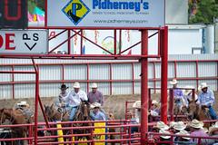 Ponoka Stampede 2016 (tallhuskymike) Tags: ponoka stampede rodeo ponokastampede cowboy 2016 horse action outdoors alberta prorodeo