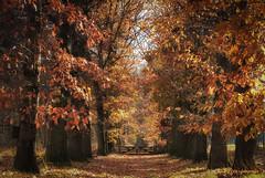 the wooden fence (www.petje-fotografie.nl) Tags: arnhem bomen gelderland ptjefotografie velp bos herfst kleuren