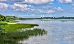Elbe, nördlich von Blankenese (lotharmeyer) Tags: möwen blankenese schilf clouds elbe green spiegelung refextionen nature
