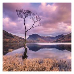 Standing Tall (Seen in Explore) (Mark Crawshaw) Tags: cumbria canon1dx leefilters longexposure lakedistrict buttermere lonetree