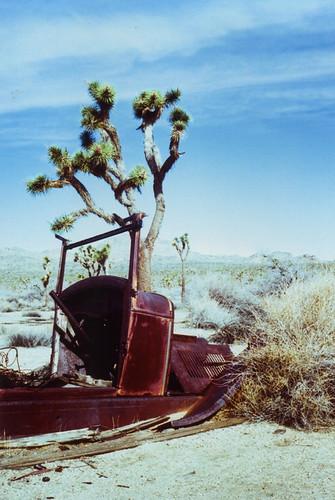 Voigtlander VF101 Samuelson's Rocks J-Tree 3