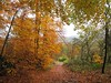 Autumn walk (Windless) Tags: red orange green autumn path trees wood leaves scenicsnotjustlandscapes