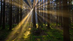 Light Beyond (joseph_donnelly) Tags: luminar forest light rays sun stream trees