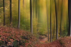autumn atmosphere (renatecamin) Tags: trees art autumn abstract forest herbst baum