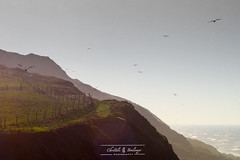 Vol au dessus des falaises - de Christèle Boulanger