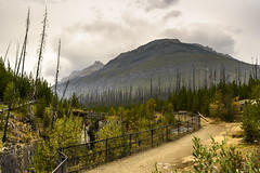 After the Burn (TigerPal) Tags: banff alberta marblecanyon park banffnationalpark canyon mountain rockies rockymountains burn forest forestfire path river falls rapids