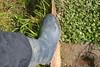 87 -- Dunlop hevea Ripped Wellies -- Bottes Hevea Dunlop trouées --  Gummistiefel Undicht -- Gescheurde laarzen (HeveaFan) Tags: rubberboots rubberlaazen 在泥里的靴子橡胶 kaplaarzen ゴム長靴 gummistiefel 威灵顿长靴 stiefel stivali stövlar ブーツ dunlop hevea aigle ripped wornout rainboots regenlaarzen wellies bottes wellworn caoutchouc galoshes wreckled trashed regenstiefel waterlaarzen soles tuinlaarzen loch leaky damaged trouée undicht versleten laarzen boots wellington kaput mud boue fertig riss gomma trou abgelatscht kaputt lek gumboots bottas vredesteinlaarzen vredesteinwellies vredesteinstiefel