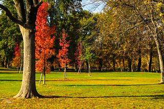 L'autunno ai giardini Margherita - 106