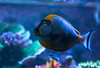 8A0A9100 (ct_purley) Tags: reef tank corals fish saltwater canon 5d mark iv dan underwater