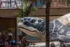 Big Turtle (foto.karlchen) Tags: kuta bali indonesien turtle schildkröte